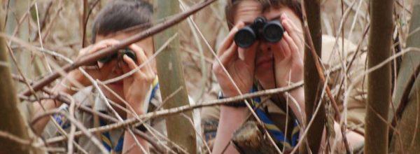 Mission «Observatoire des oiseaux»